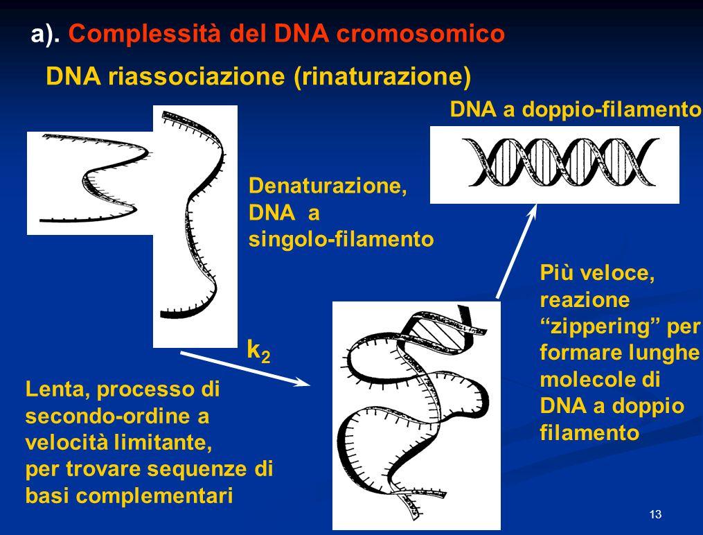 a). Complessità del DNA cromosomico