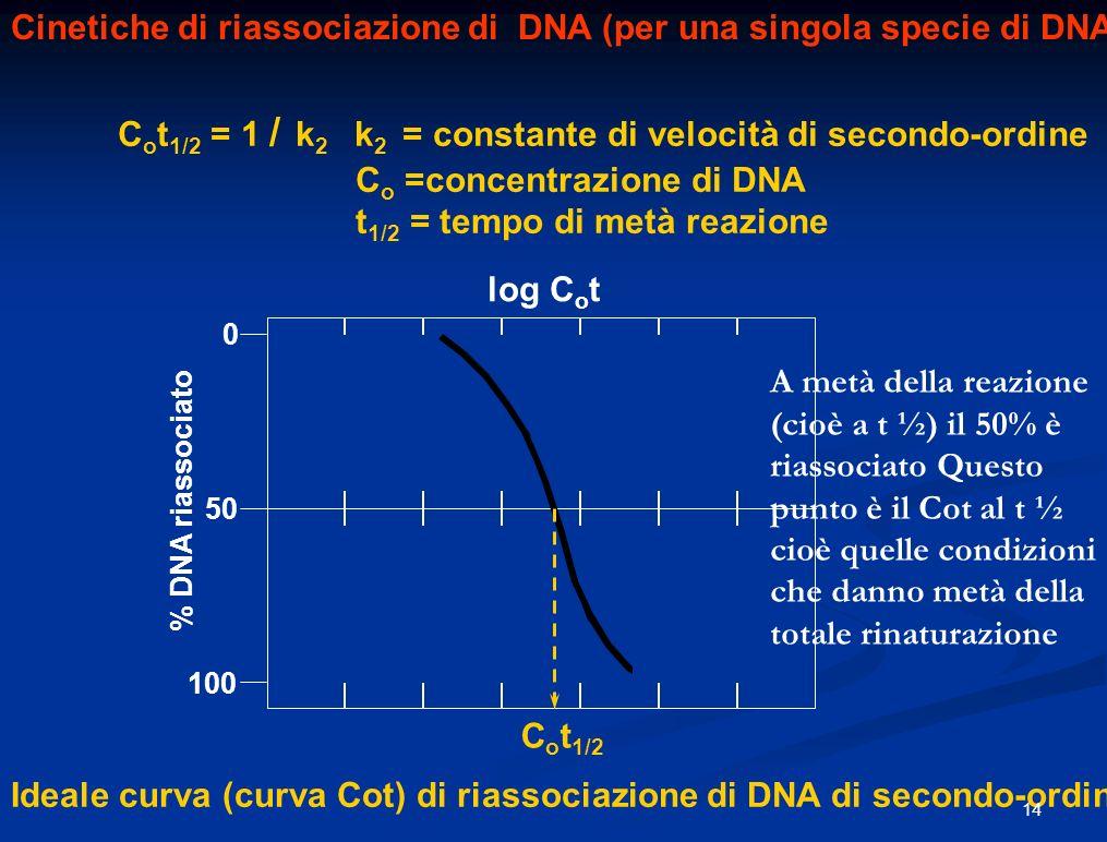 Cinetiche di riassociazione di DNA (per una singola specie di DNA)