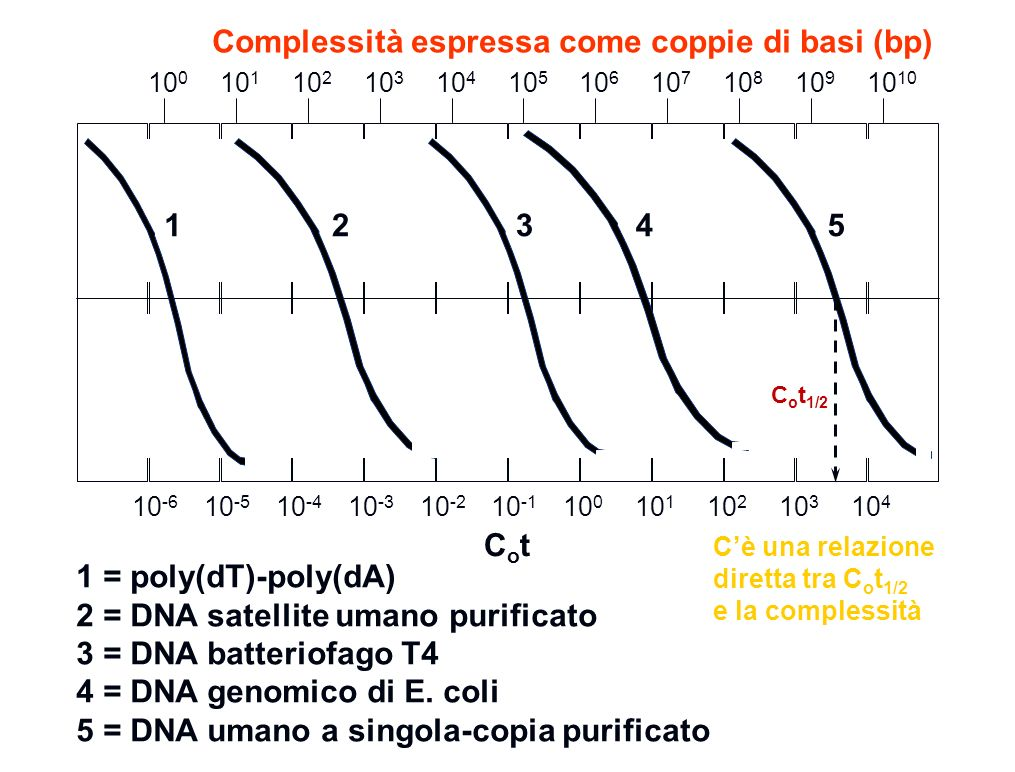 Complessità espressa come coppie di basi (bp)