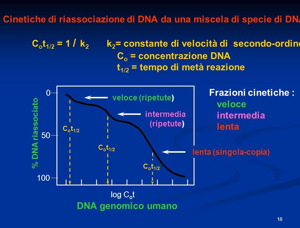Cinetiche di riassociazione di DNA da una miscela di specie di DNA