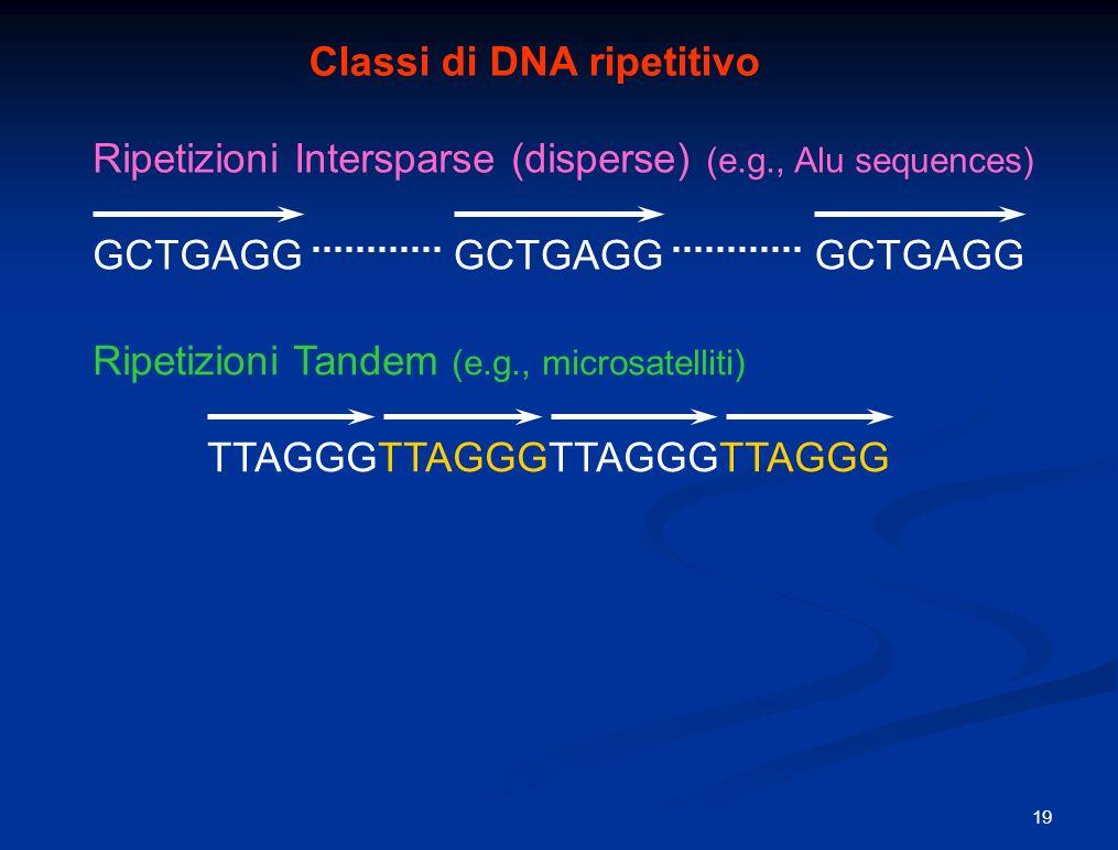 Classi di DNA ripetitivo