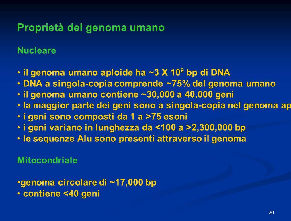 Proprietà del genoma umano