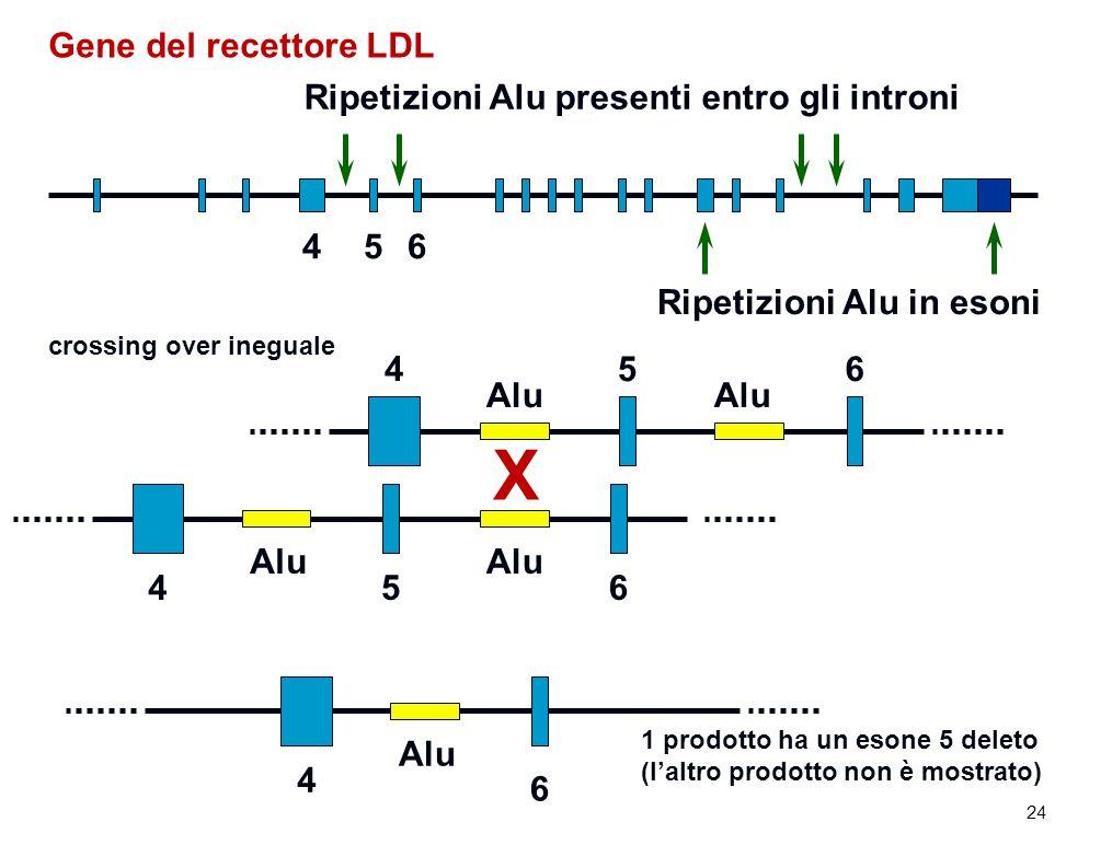 X Gene del recettore LDL Ripetizioni Alu presenti entro gli introni 4