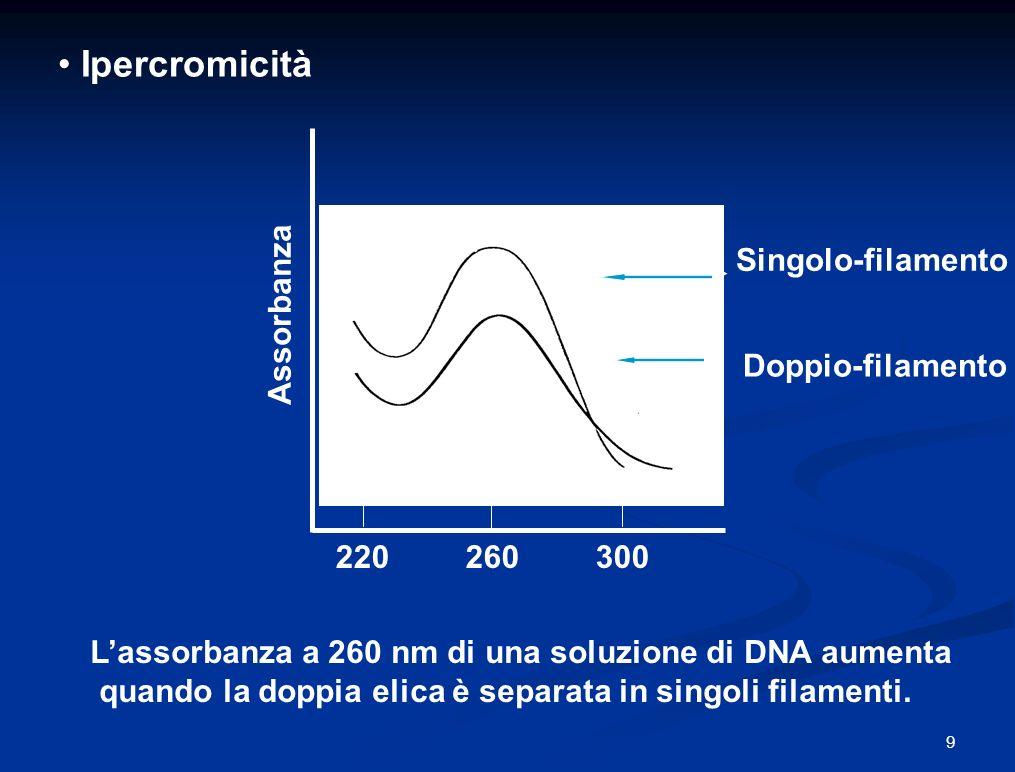Ipercromicità Singolo-filamento Assorbanza Doppio-filamento 220 260