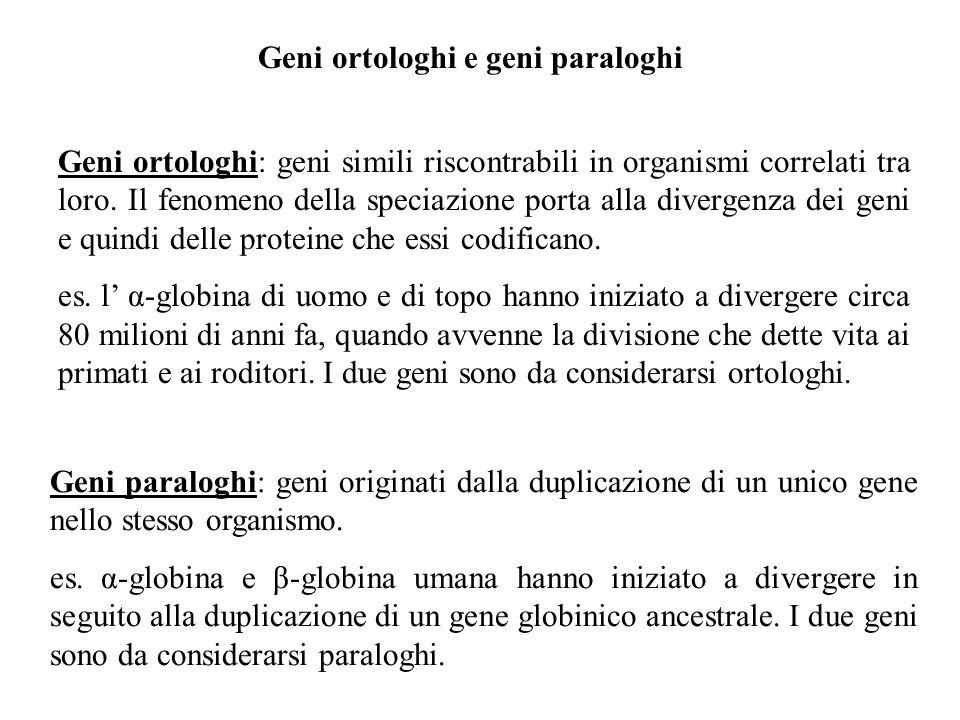Geni ortologhi e geni paraloghi