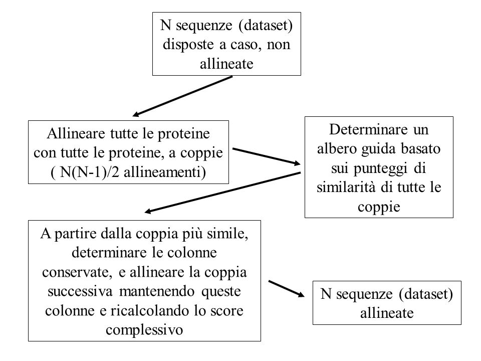 N sequenze (dataset) disposte a caso, non allineate
