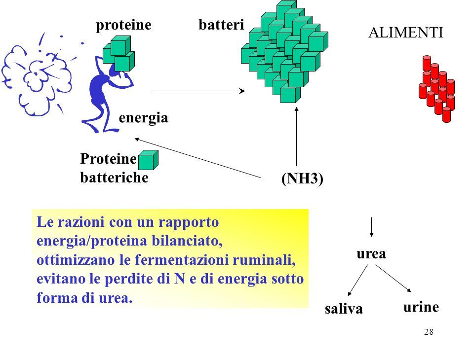 proteine batteri. ALIMENTI. energia. Proteine. batteriche. (NH3) Le razioni con un rapporto. energia/proteina bilanciato,