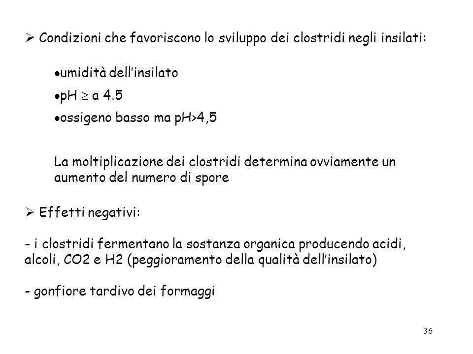  Condizioni che favoriscono lo sviluppo dei clostridi negli insilati:
