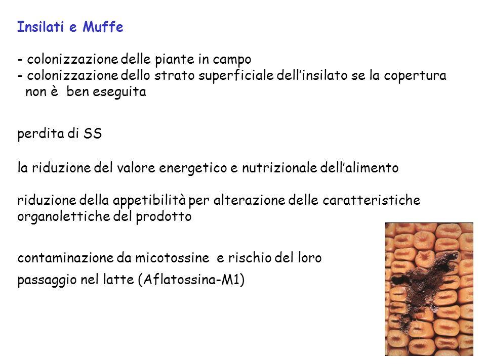 Insilati e Muffe - colonizzazione delle piante in campo. - colonizzazione dello strato superficiale dell'insilato se la copertura.