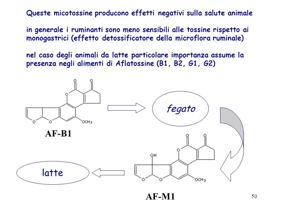 Queste micotossine producono effetti negativi sulla salute animale