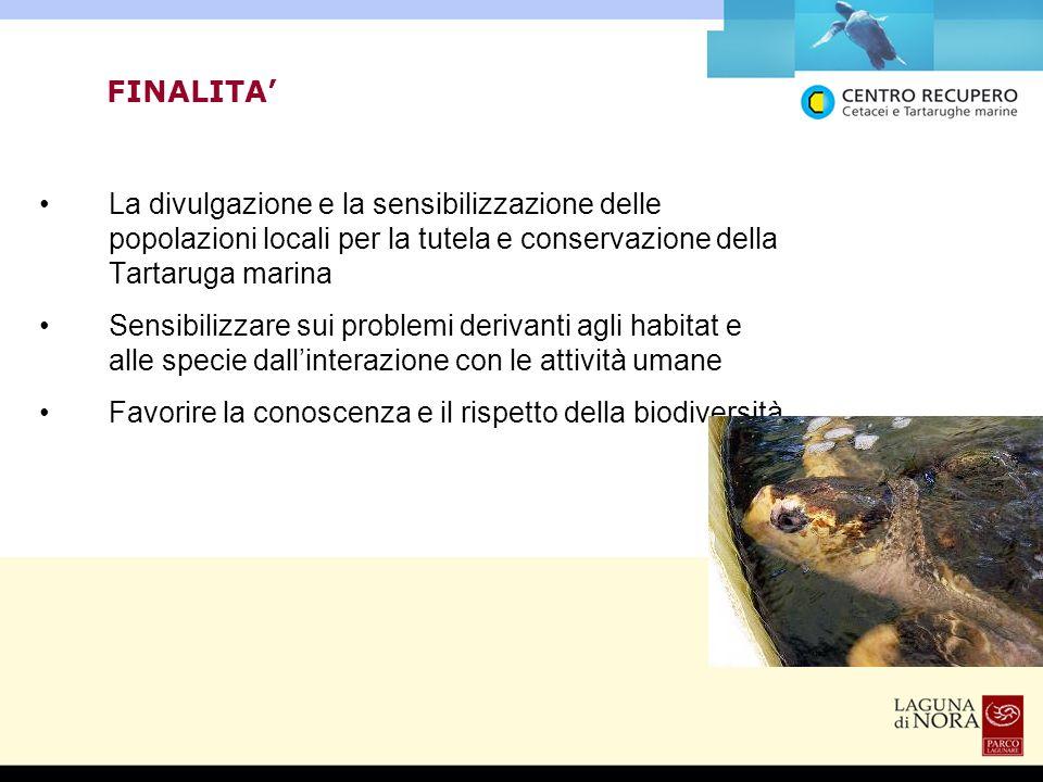 FINALITA' La divulgazione e la sensibilizzazione delle popolazioni locali per la tutela e conservazione della Tartaruga marina.