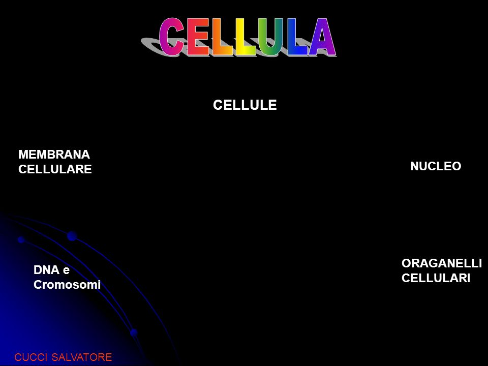 CELLULA CELLULE MEMBRANA CELLULARE NUCLEO ORAGANELLI DNA e Cromosomi
