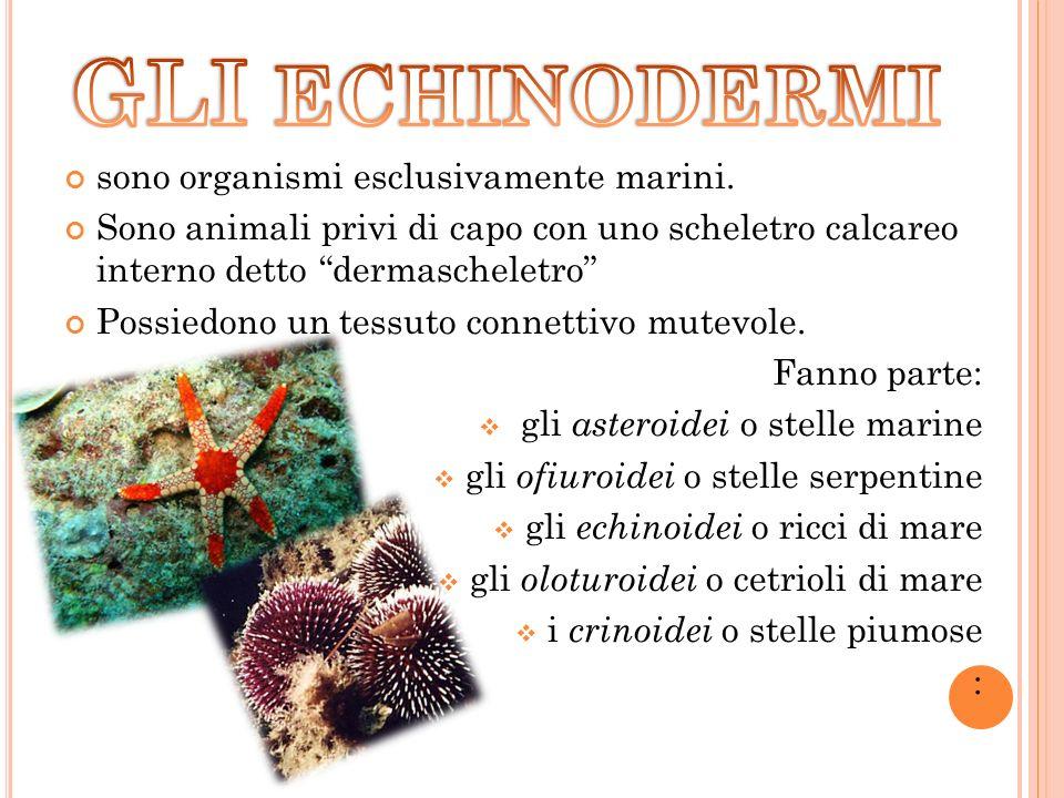 GLI ECHINODERMI sono organismi esclusivamente marini.