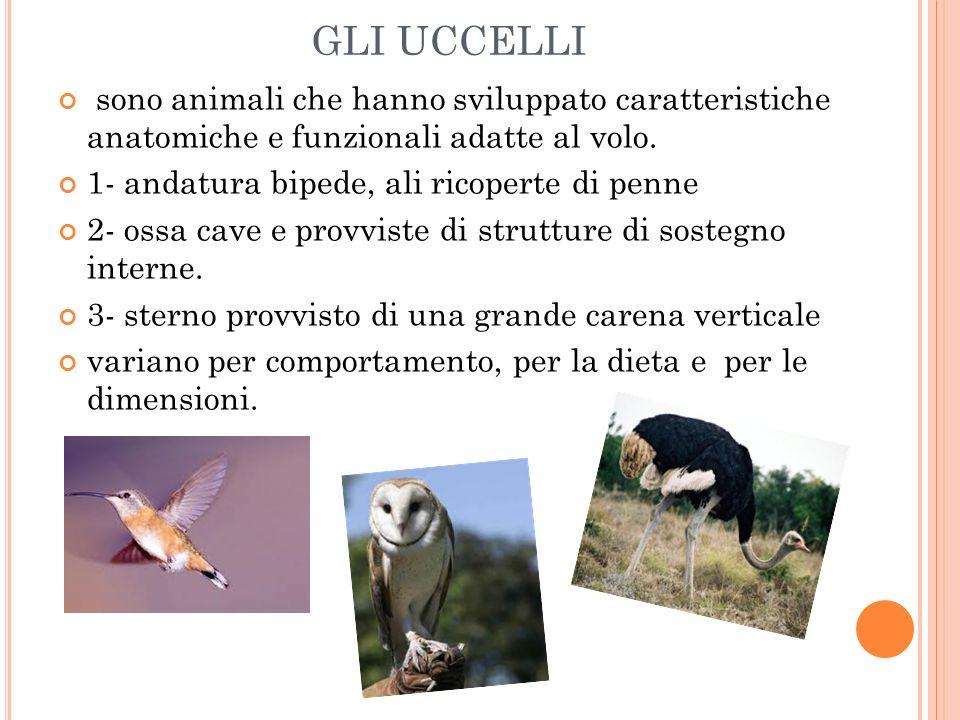 GLI UCCELLI sono animali che hanno sviluppato caratteristiche anatomiche e funzionali adatte al volo.