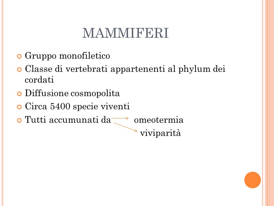 mammiferi Gruppo monofiletico