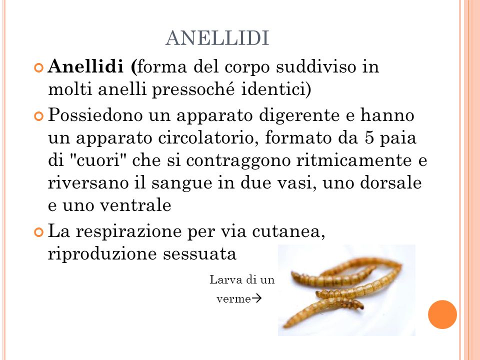 ANELLIDI Anellidi (forma del corpo suddiviso in molti anelli pressoché identici)