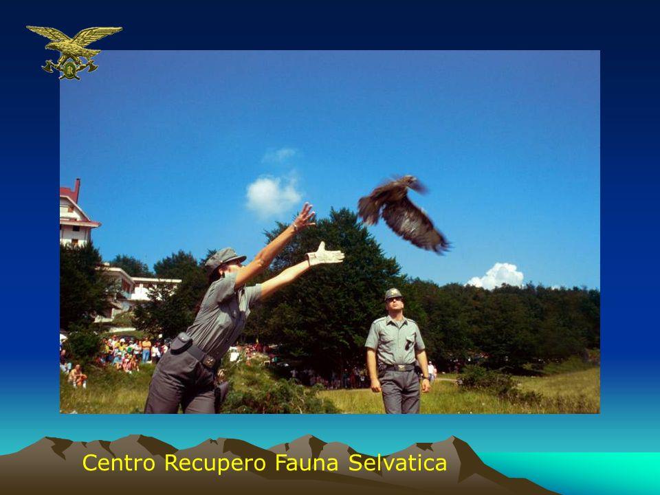 Centro Recupero Fauna Selvatica