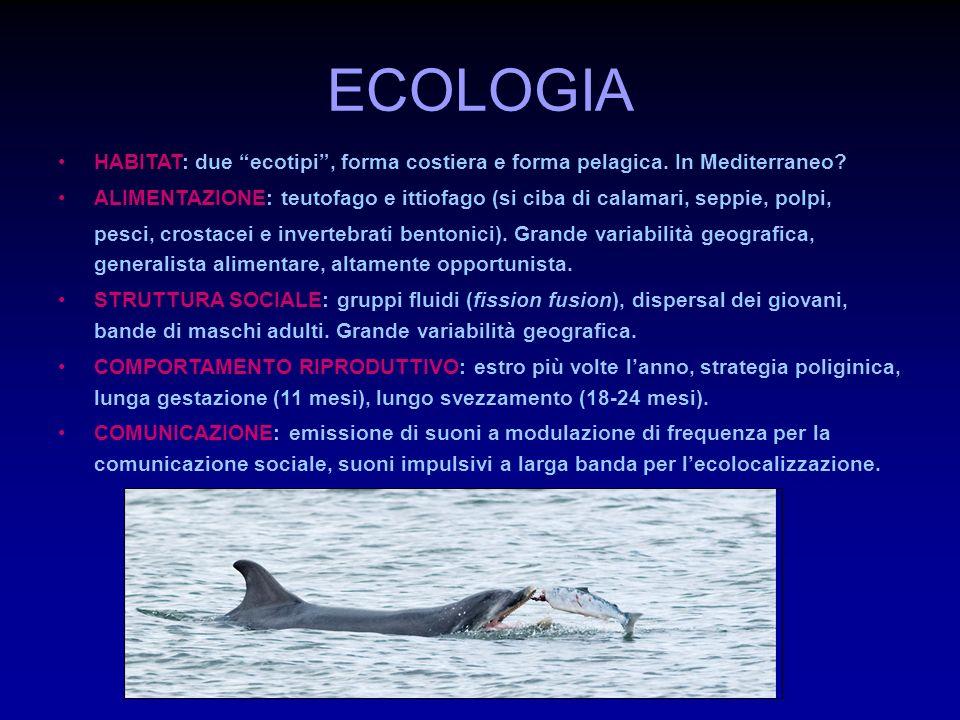 ECOLOGIA HABITAT: due ecotipi , forma costiera e forma pelagica. In Mediterraneo