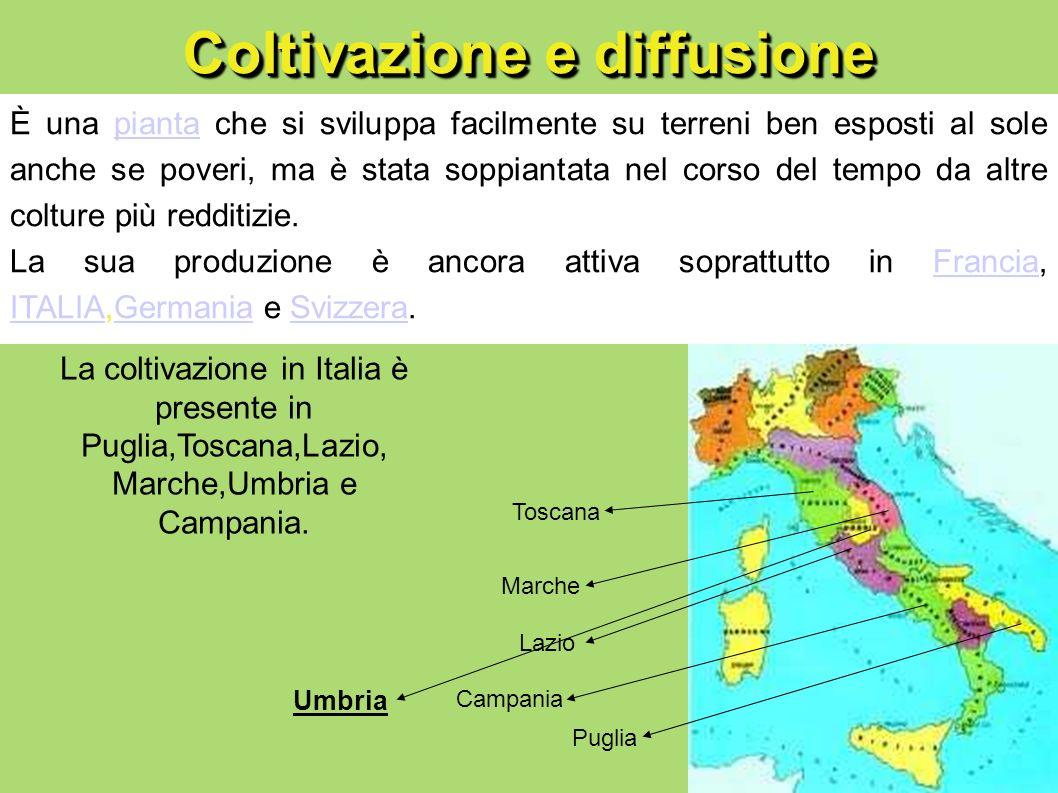 Coltivazione e diffusione