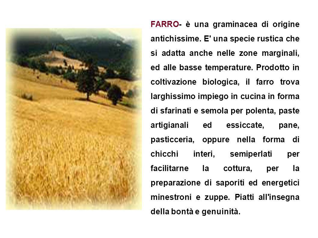 FARRO- è una graminacea di origine antichissime