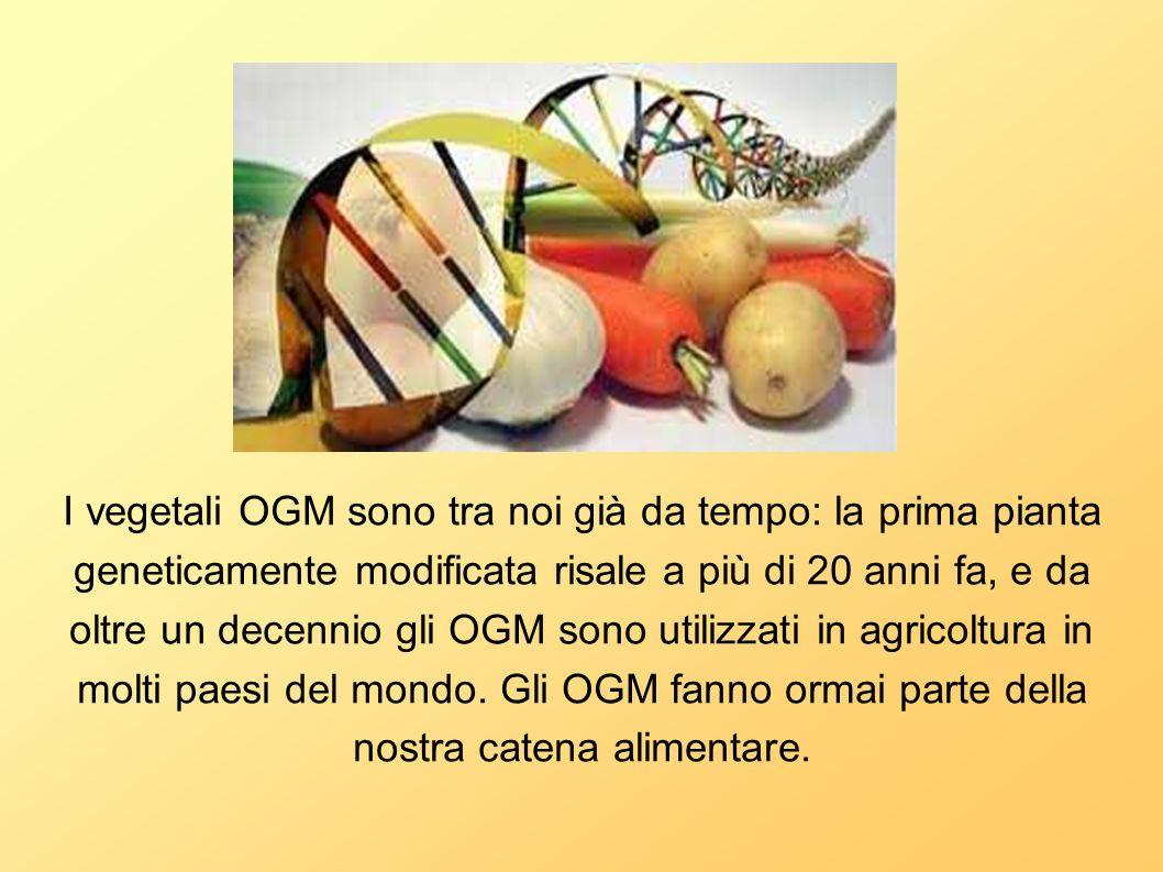 I vegetali OGM sono tra noi già da tempo: la prima pianta geneticamente modificata risale a più di 20 anni fa, e da oltre un decennio gli OGM sono utilizzati in agricoltura in molti paesi del mondo.