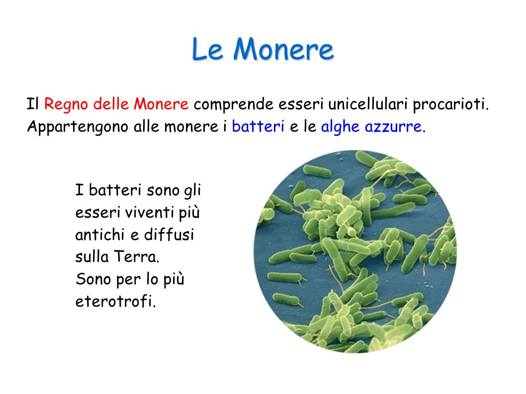 Le Monere Il Regno delle Monere comprende esseri unicellulari procarioti. Appartengono alle monere i batteri e le alghe azzurre.