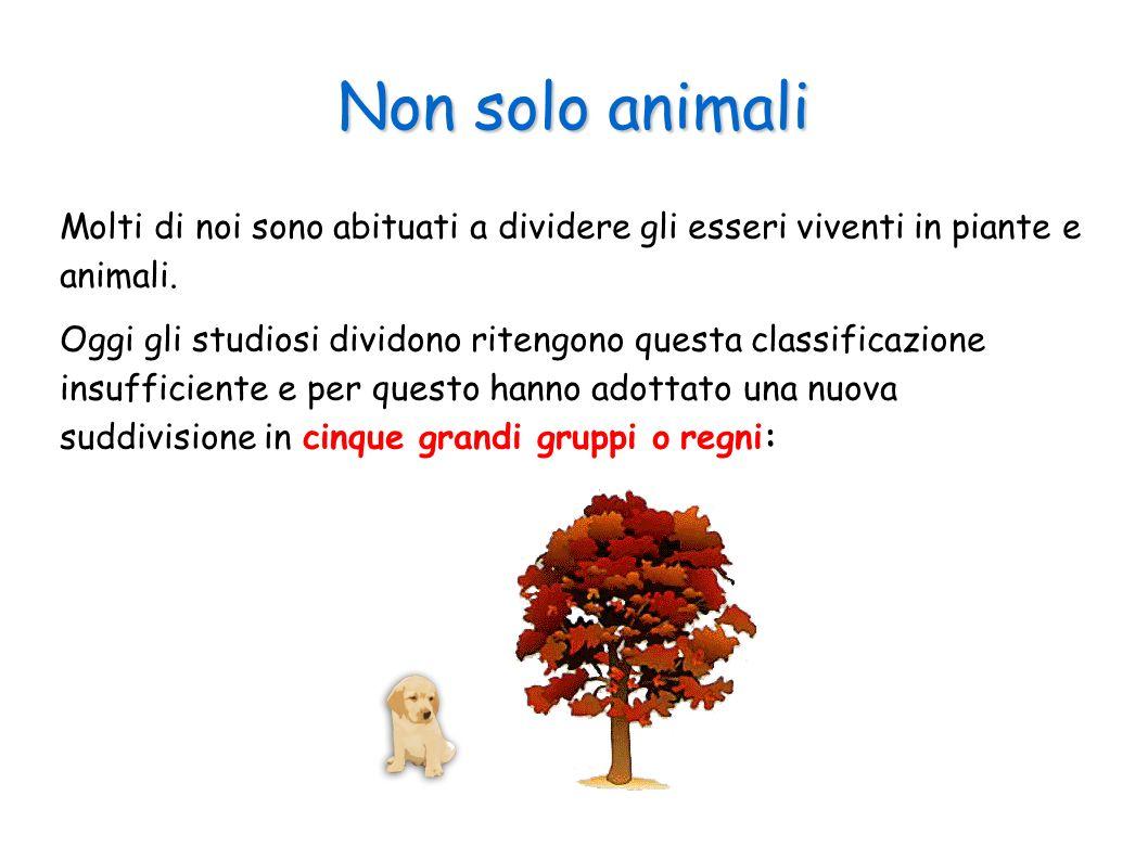 Non solo animali Molti di noi sono abituati a dividere gli esseri viventi in piante e animali.