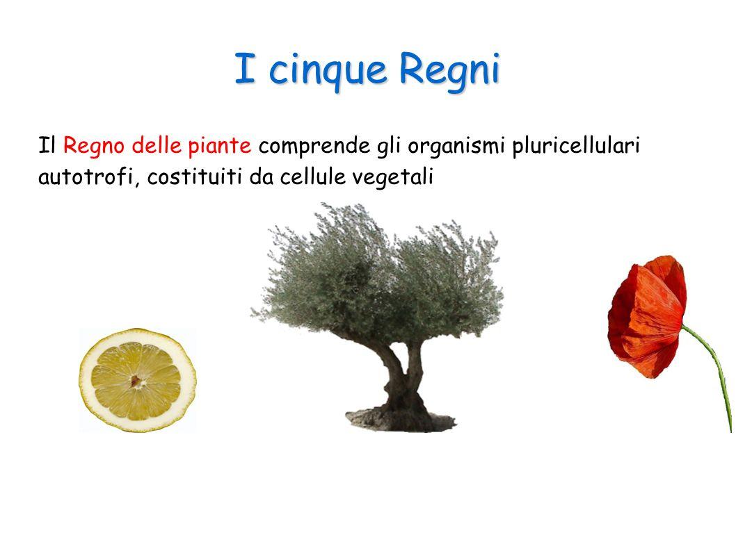 I cinque Regni Il Regno delle piante comprende gli organismi pluricellulari autotrofi, costituiti da cellule vegetali.