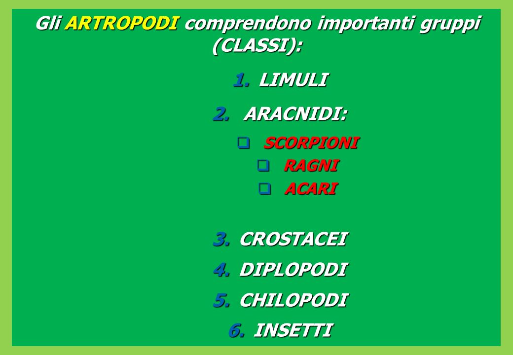 Gli ARTROPODI comprendono importanti gruppi (CLASSI):
