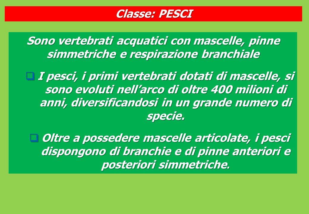 Classe: PESCI Sono vertebrati acquatici con mascelle, pinne simmetriche e respirazione branchiale.