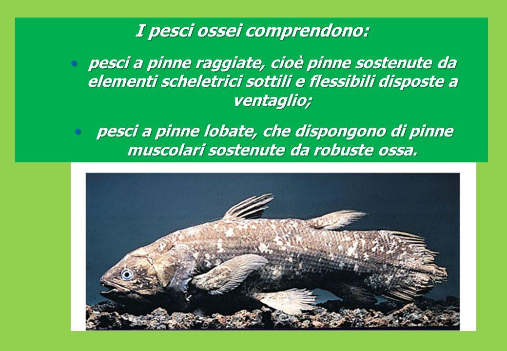 I pesci ossei comprendono: