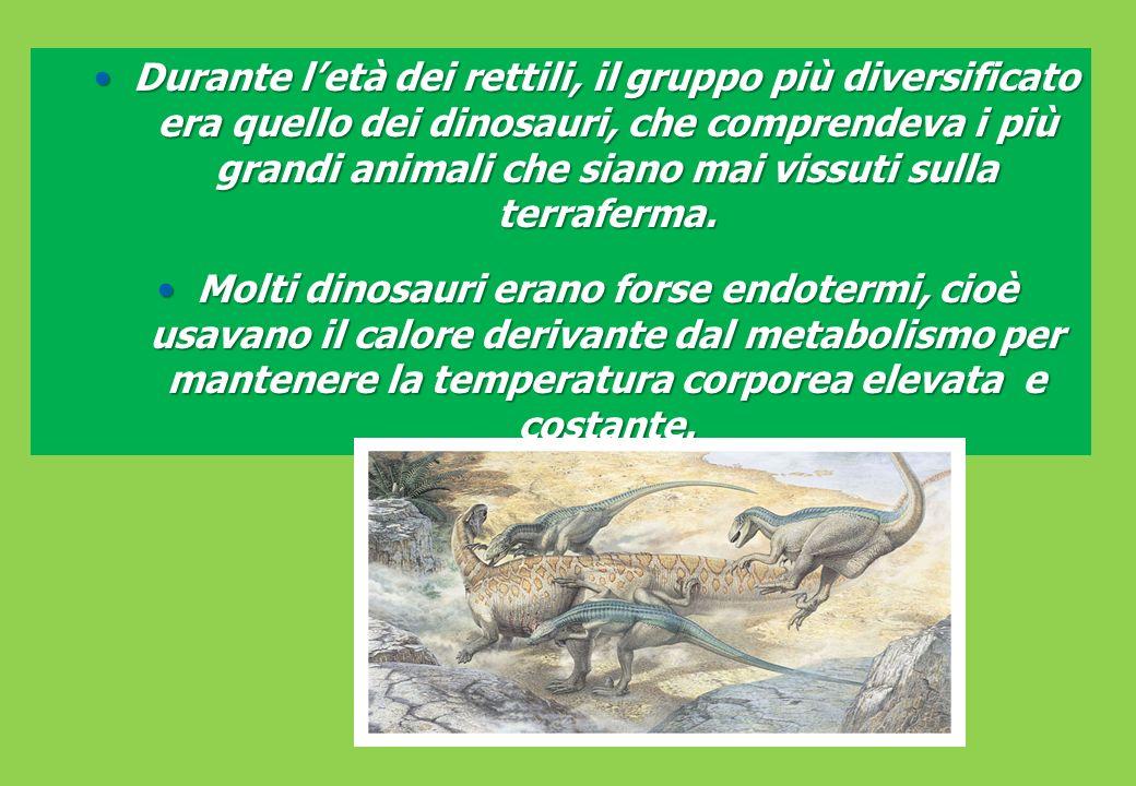Durante l'età dei rettili, il gruppo più diversificato era quello dei dinosauri, che comprendeva i più grandi animali che siano mai vissuti sulla terraferma.