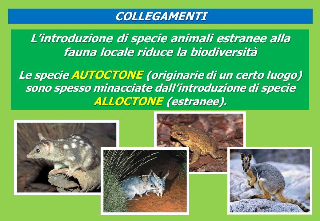 COLLEGAMENTI L'introduzione di specie animali estranee alla fauna locale riduce la biodiversità.