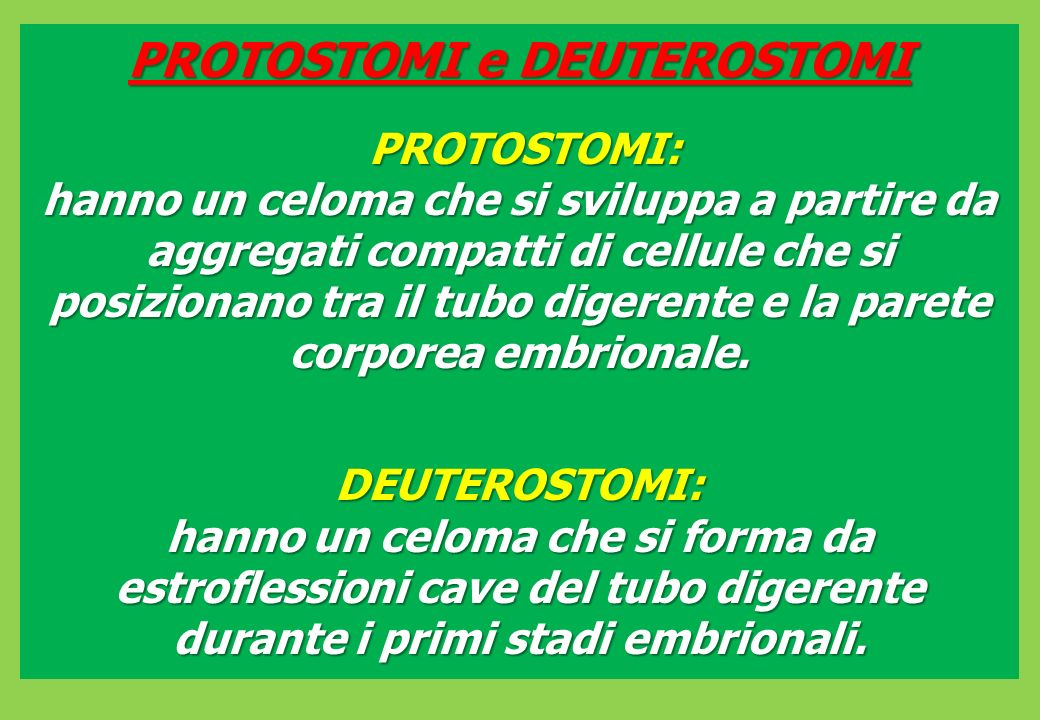 PROTOSTOMI e DEUTEROSTOMI