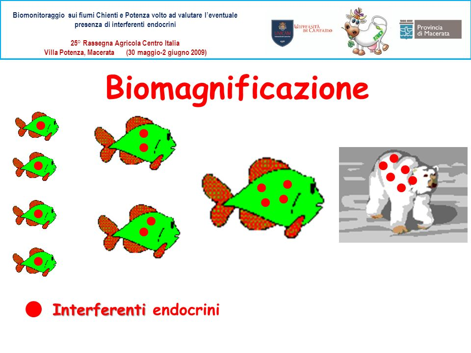 Biomagnificazione Interferenti endocrini