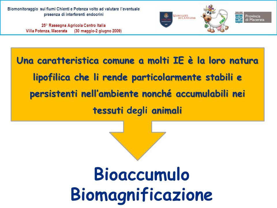 Bioaccumulo Biomagnificazione