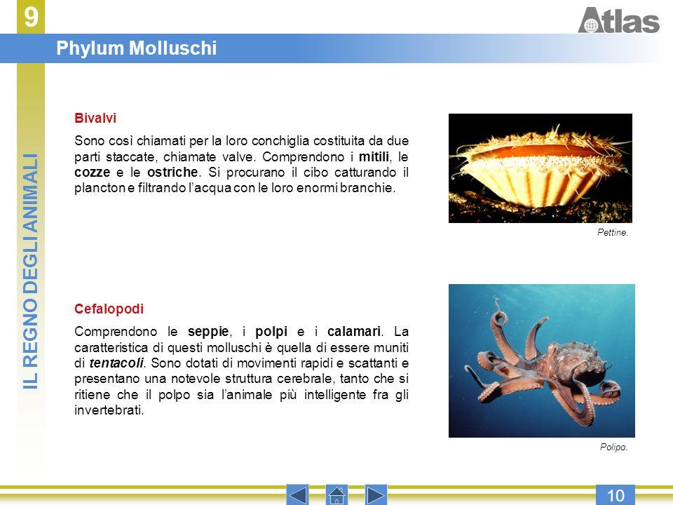 9 Phylum Molluschi IL REGNO DEGLI ANIMALI 10 Bivalvi