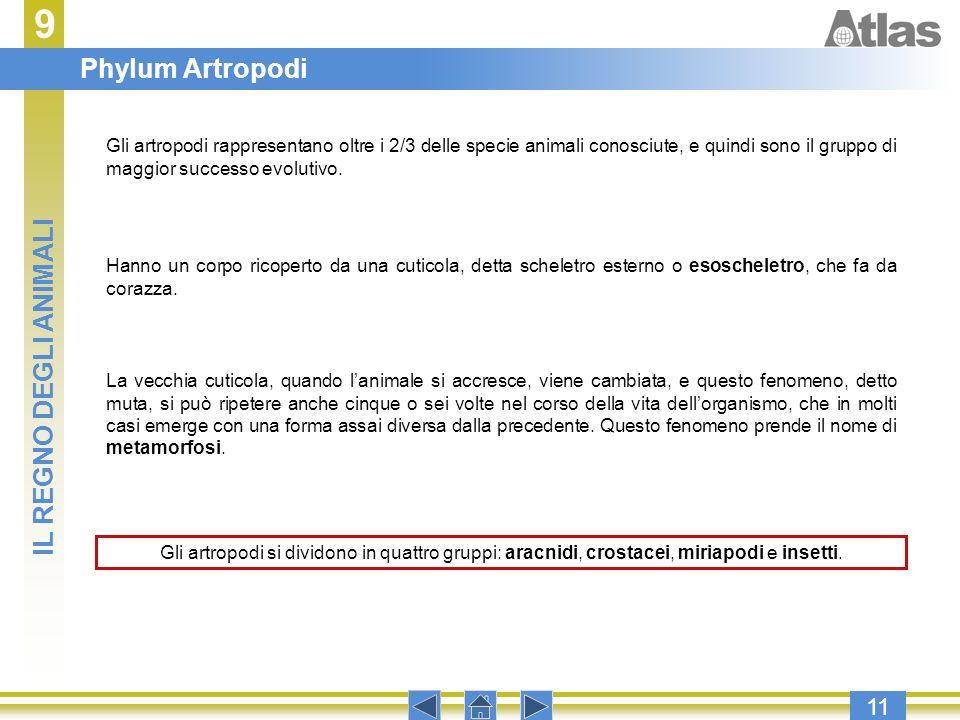 9 Phylum Artropodi IL REGNO DEGLI ANIMALI 11