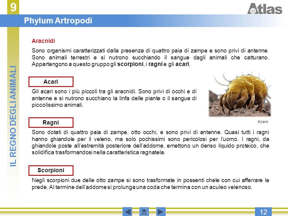 9 Phylum Artropodi IL REGNO DEGLI ANIMALI 12 Aracnidi