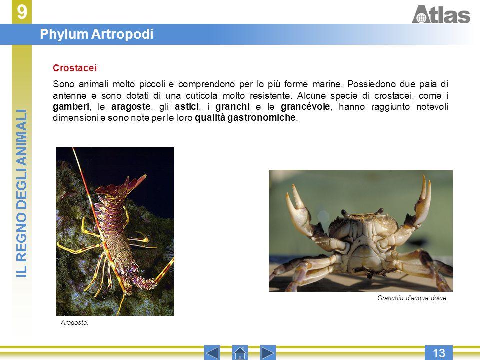 9 Phylum Artropodi IL REGNO DEGLI ANIMALI 13 Crostacei