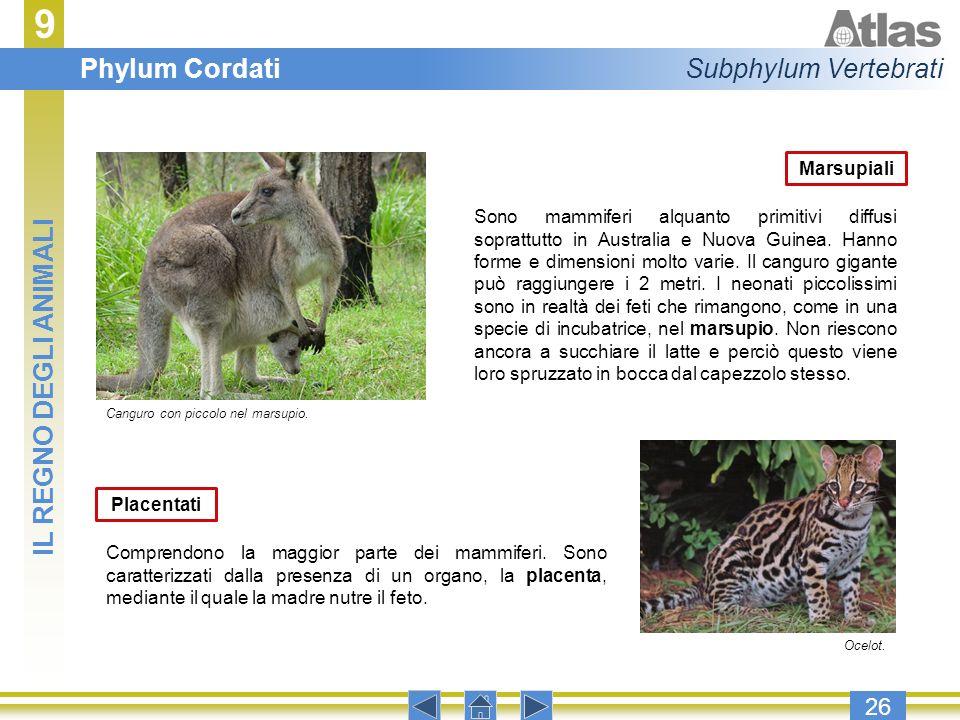 9 Phylum Cordati Subphylum Vertebrati IL REGNO DEGLI ANIMALI 26