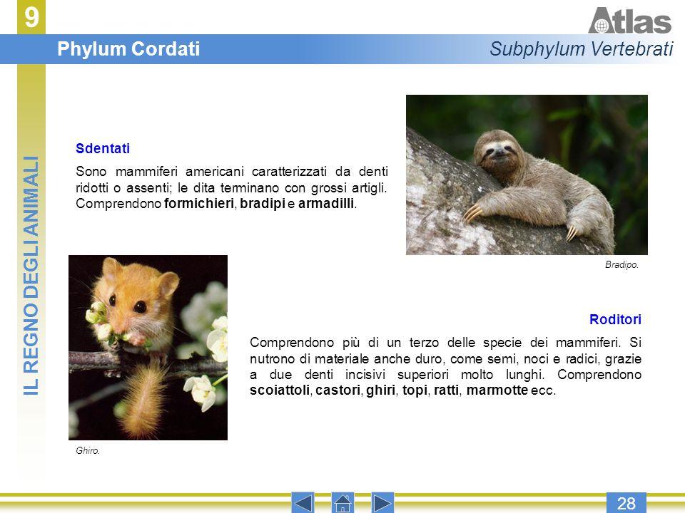 9 Phylum Cordati Subphylum Vertebrati IL REGNO DEGLI ANIMALI 28
