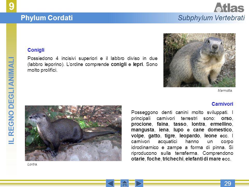 9 Phylum Cordati Subphylum Vertebrati IL REGNO DEGLI ANIMALI 29
