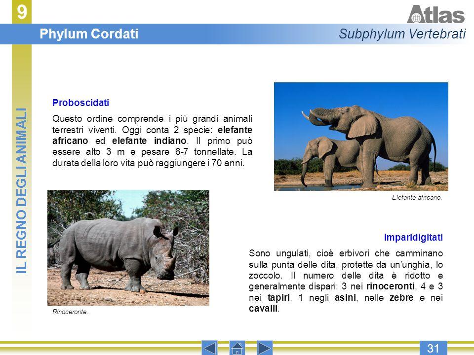9 Phylum Cordati Subphylum Vertebrati IL REGNO DEGLI ANIMALI 31