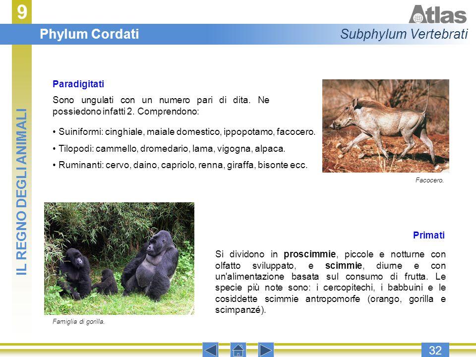 9 Phylum Cordati Subphylum Vertebrati IL REGNO DEGLI ANIMALI 32