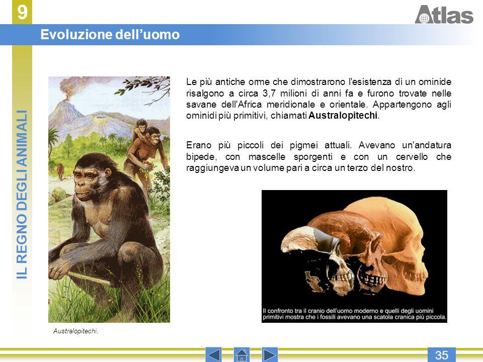 9 Evoluzione dell'uomo IL REGNO DEGLI ANIMALI 35