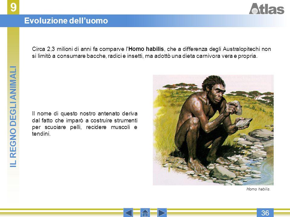 9 Evoluzione dell'uomo IL REGNO DEGLI ANIMALI 36