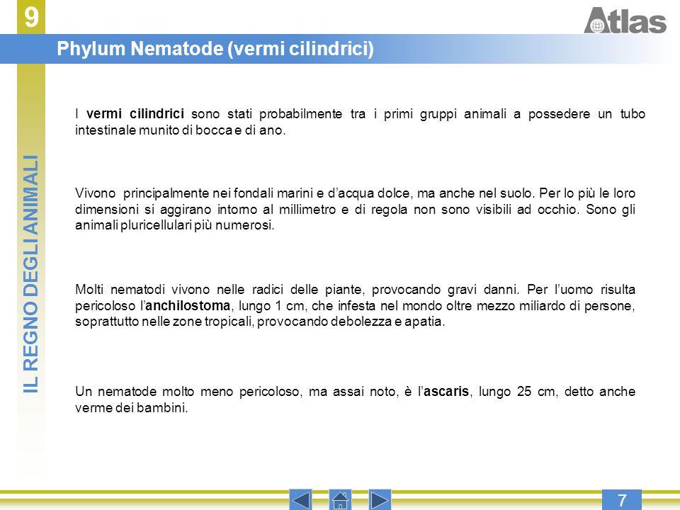 9 Phylum Nematode (vermi cilindrici) IL REGNO DEGLI ANIMALI 7