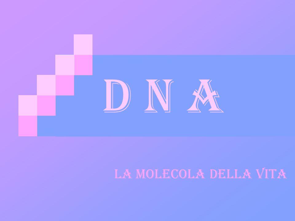D N A LA MOLECOLA DELLA VITA