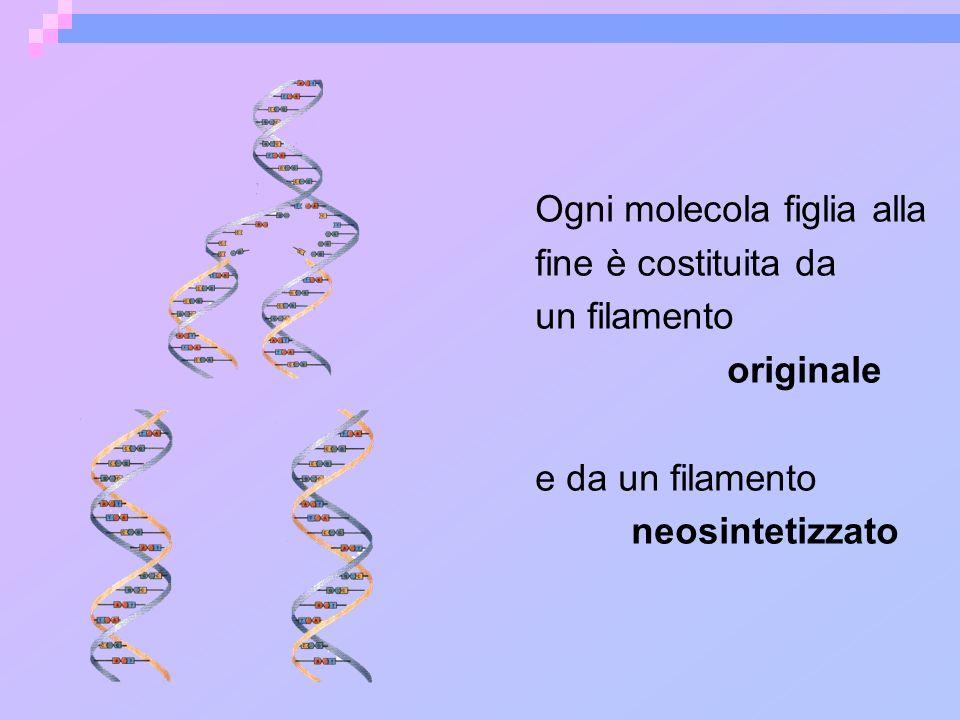 Ogni molecola figlia alla